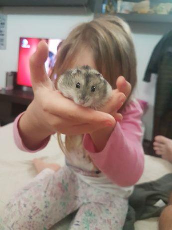 Vand  hamsteri Dr Tr Severin