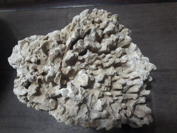 Кораллы разных размеров