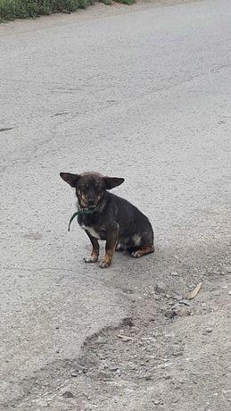 Собака потеряшка?
