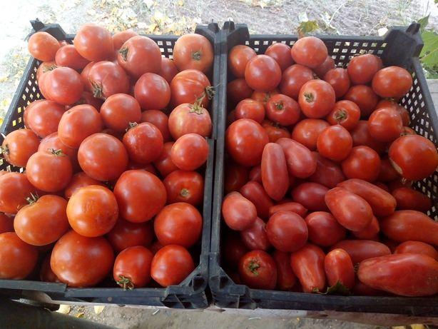 Продам домашние помидоры