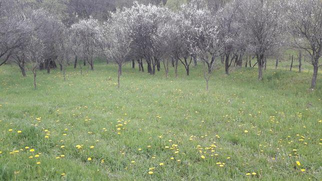 Teren zona Paroseni