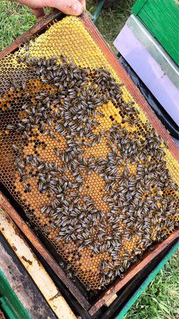 Familii de albine, stupi