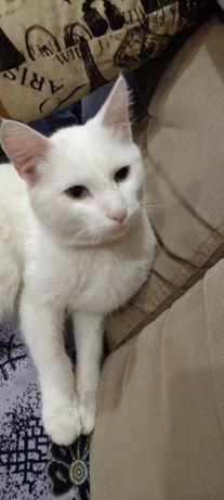 Отдам срочно белого кота