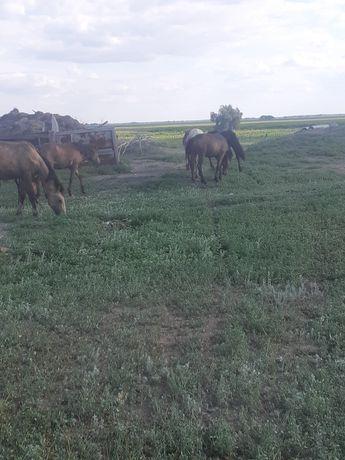 Продам лошадей полтарашки