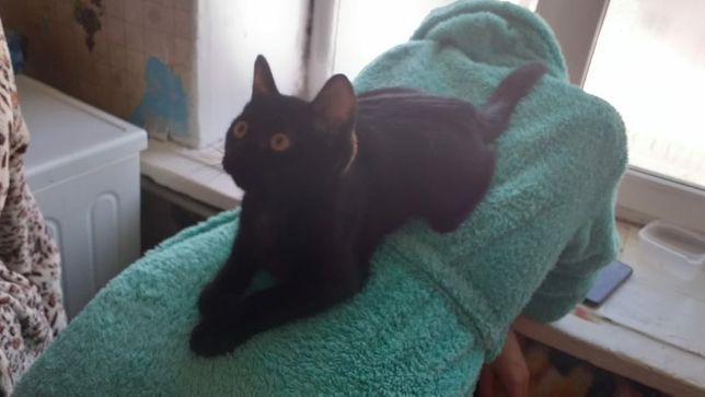 Котик ищет дом и любящих хозяев
