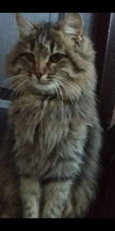 Отдадим в хорошие руки кошку Мурка