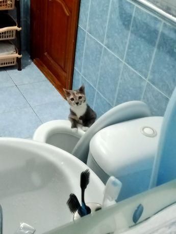 Отдам котенка в хорошие руки! Приученная к туалету.
