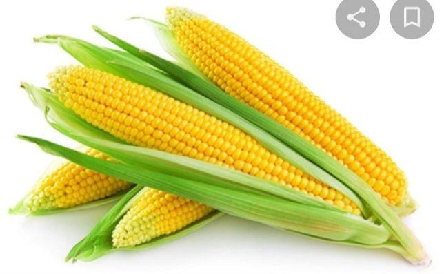 Кукуруза свежая                   .