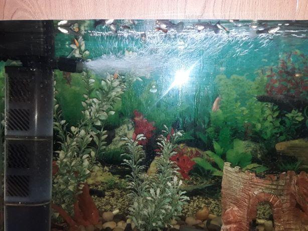 продам аквариум без рыбок пустой за 20т