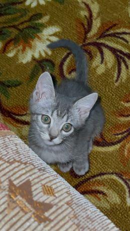 Отдам котенка 1,5 месяц