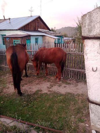 Продам лошадей цены разные звоните