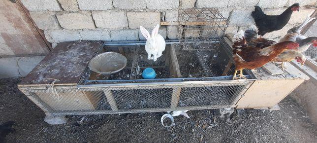 Срочно продам клетку для кроликов.