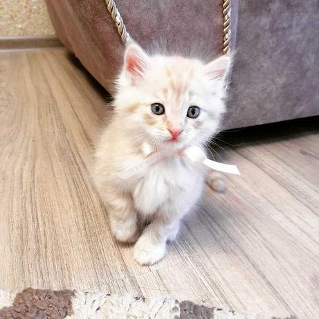 Рыжий котенок - мальчик