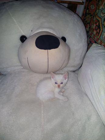Подарю милых котят