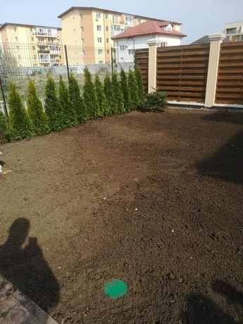 Vindem plante ornamentale