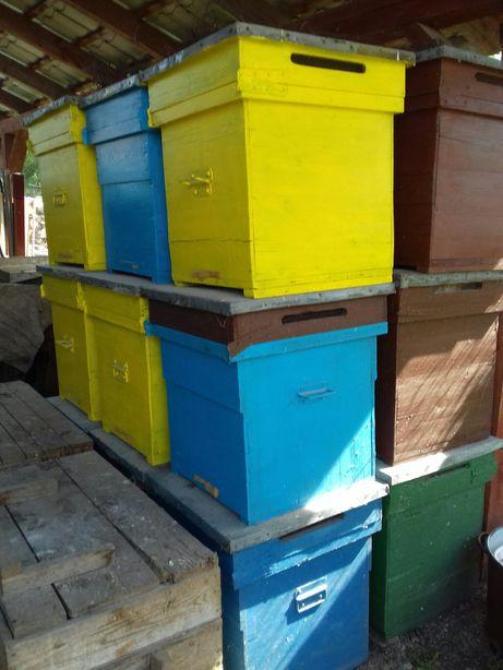 Stupi / lazi de albine