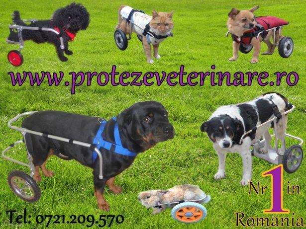 Cărucioare pentru câini paralizați