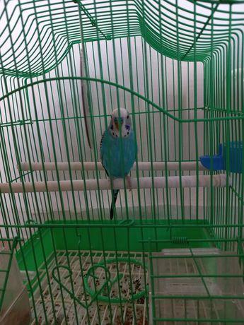 Попугай не разговаривает корм вместе клетка комплекте цвет синий с бел