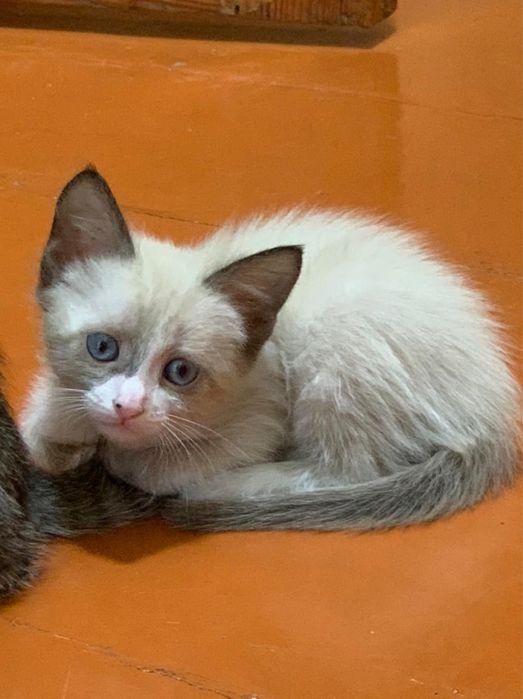 Котята Кызылорда - изображение 1
