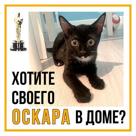 Котенок Оскар в добрую семью