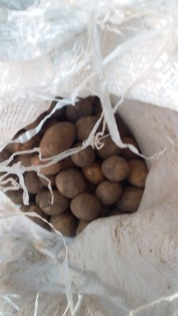 Картофель 150 тг