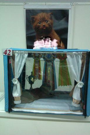Продам текстиль для клетки на выставку кошек!