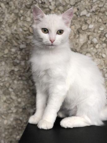 Стерелизованная кошка в добрые руки 7 месяцев