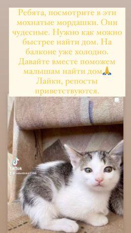 Отдам в добрые руки чудестных кото-малышей