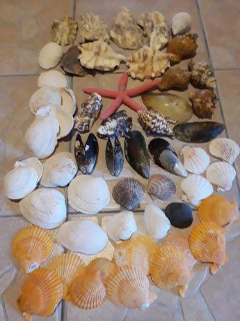 Corali,stele si arici de mare,scoici,etc