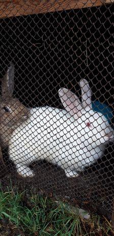 Продам кроликов взрослых и подростков