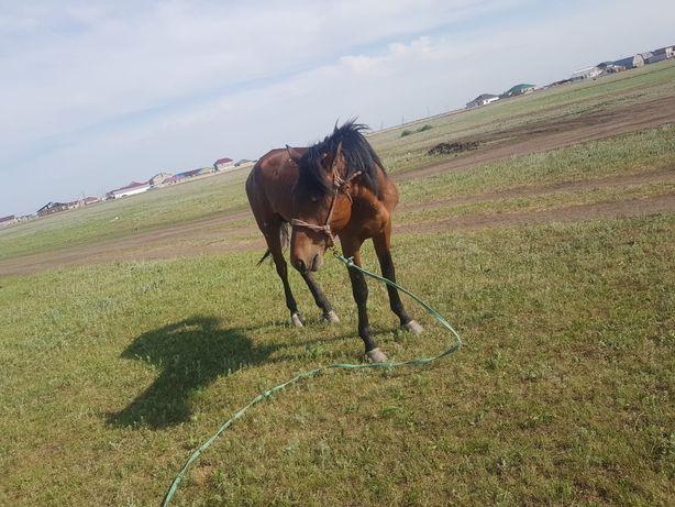 Лошадь. Костанай парода