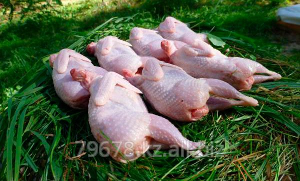 Мясо перепелов (домашнее)