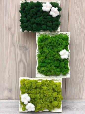 Ramă colaj decorată cu licheni în trei nuanțe de verde