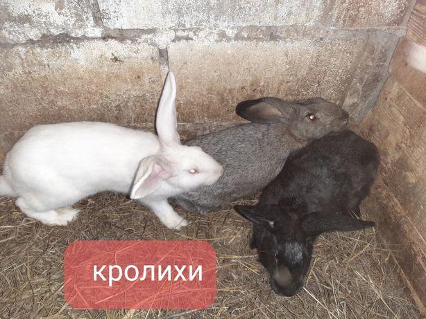 Продам кроликов разного возраста