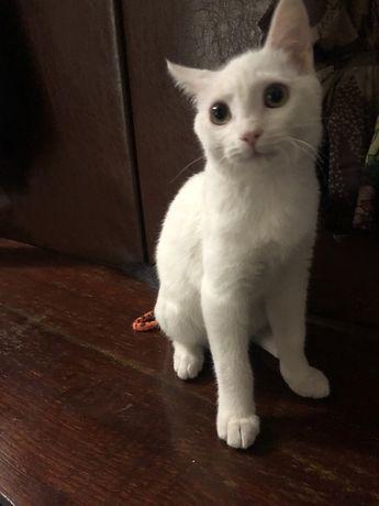Котик мальчик в добрые руки