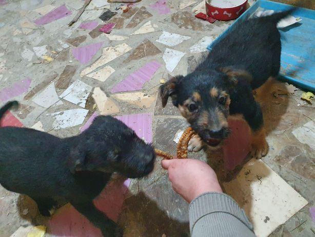 2 щенка с приданым, ищут дом. Можем привезти.