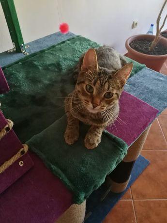 Casa pisici, jucarie pisici, ansamblu joaca pisici, turn pisici