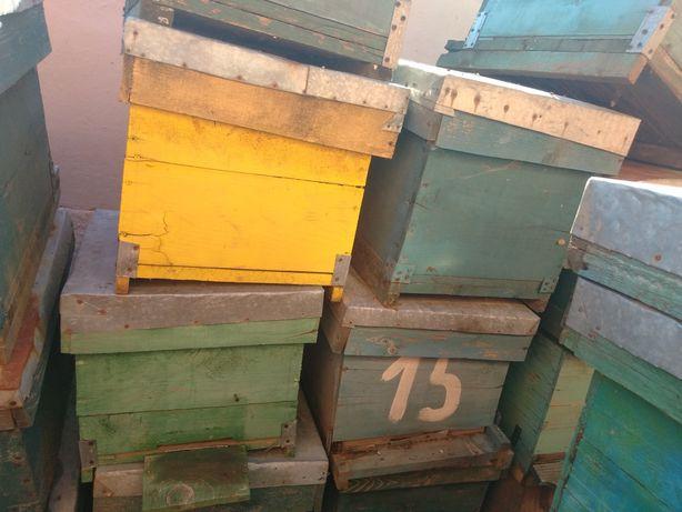 Vand cutii stupi albine sau schimb cu roiuri