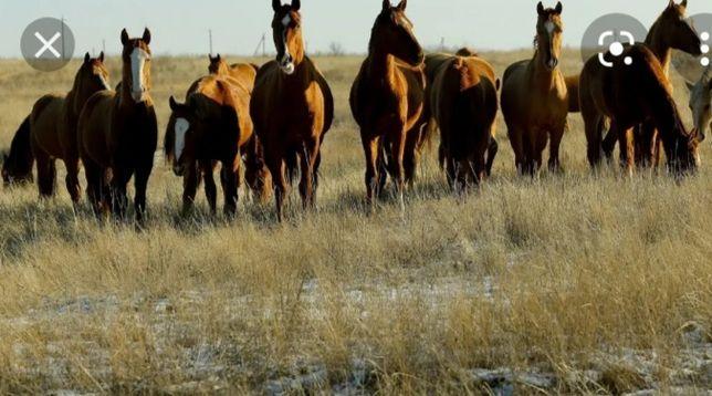 Продаются лошади разных возрастов