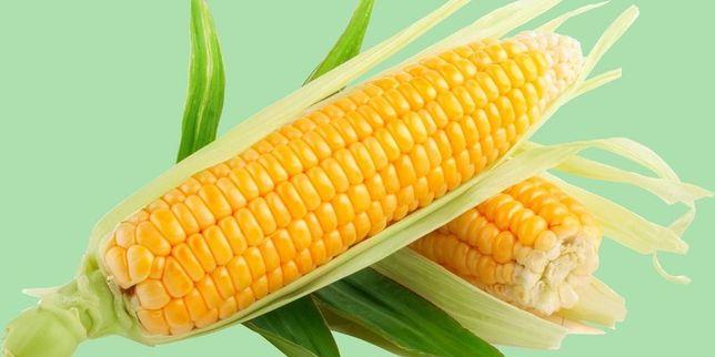 Кукуруза из под комбайна 100тг