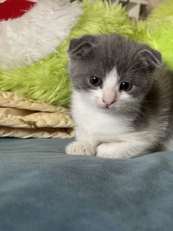 Кошка 10 000
