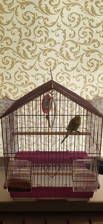 Попугай сеткасымен