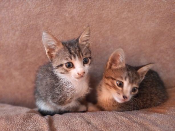 Котята в добрые и надежные руки