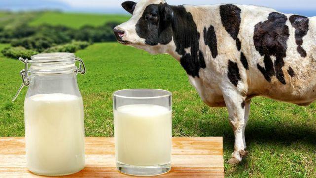 Принимаю коровье молоко.