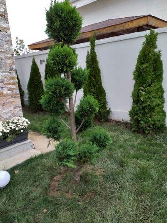 Tuia smaragd magnolia și multe alte specii diferite