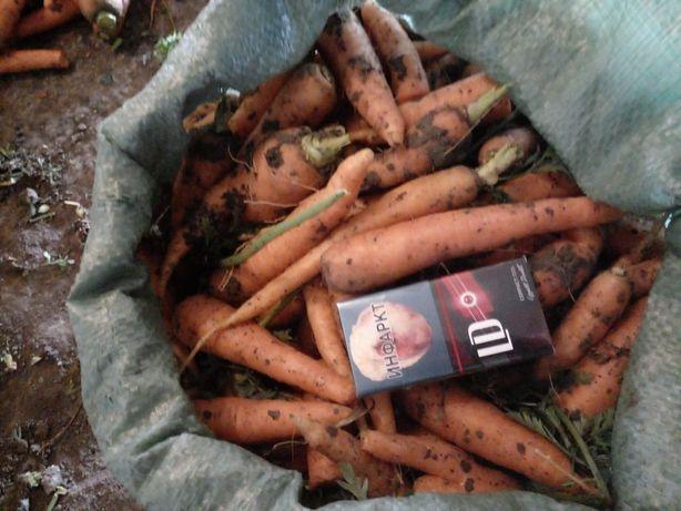 Продам морковь на корм