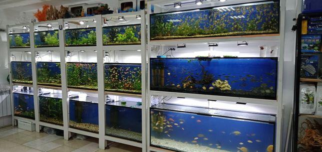 Аквариумные рыбкии