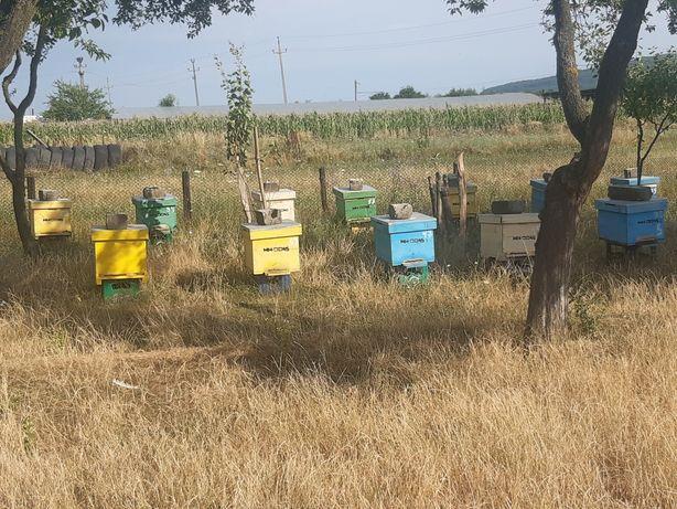 Vând miere si famili albine