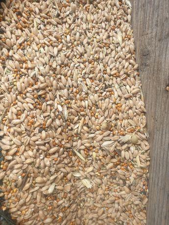 Зерно отходы по 80