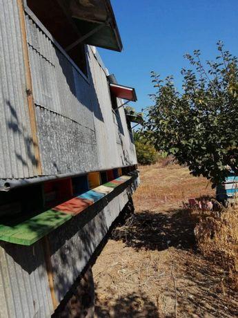 Фургон с пчелни семейства